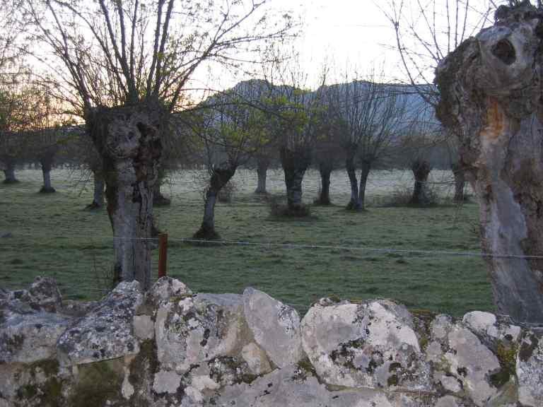 Foto de Joseba sobre la dehesa salmantina