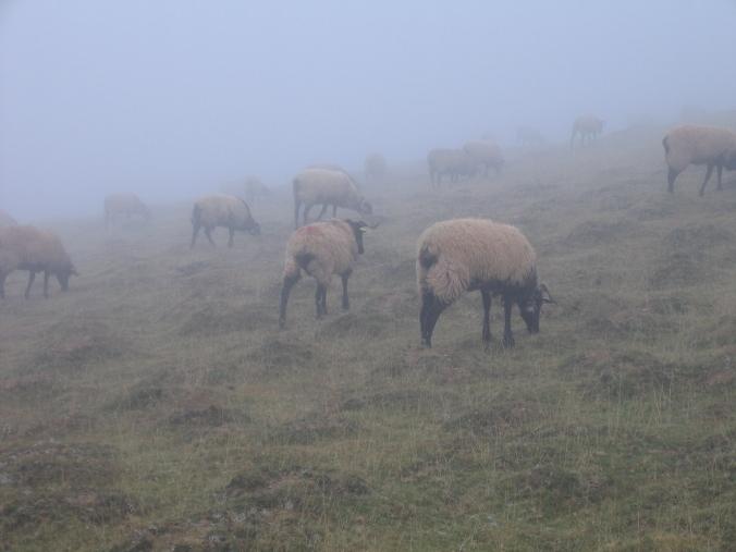 234 Pirineos
