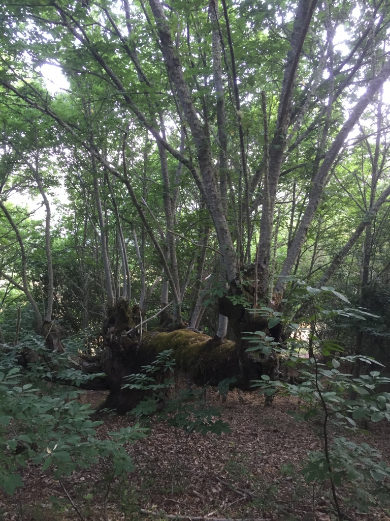 Comienzan los primeros bosques
