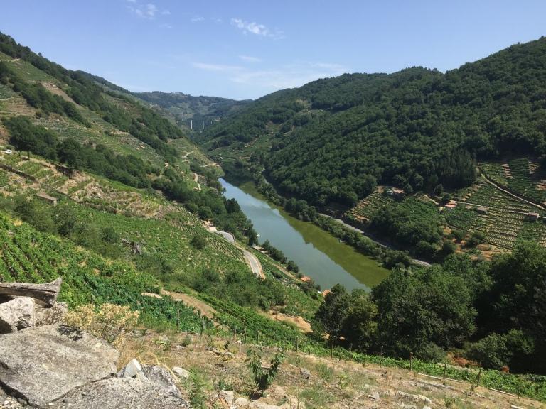 El valle desde los viñedos