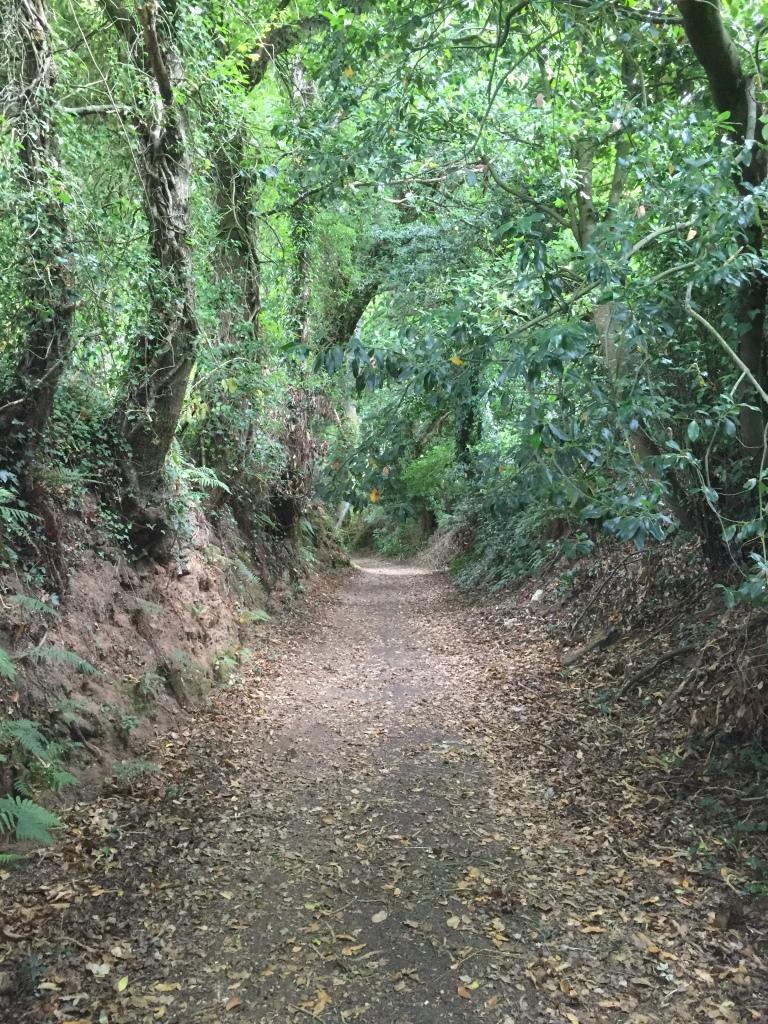Bosque de robles y castaños