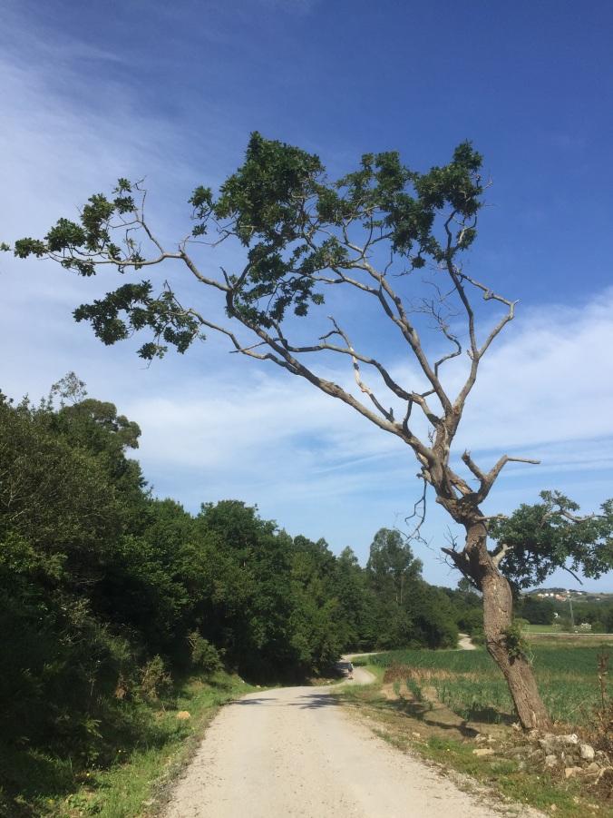 A un árbol seco...