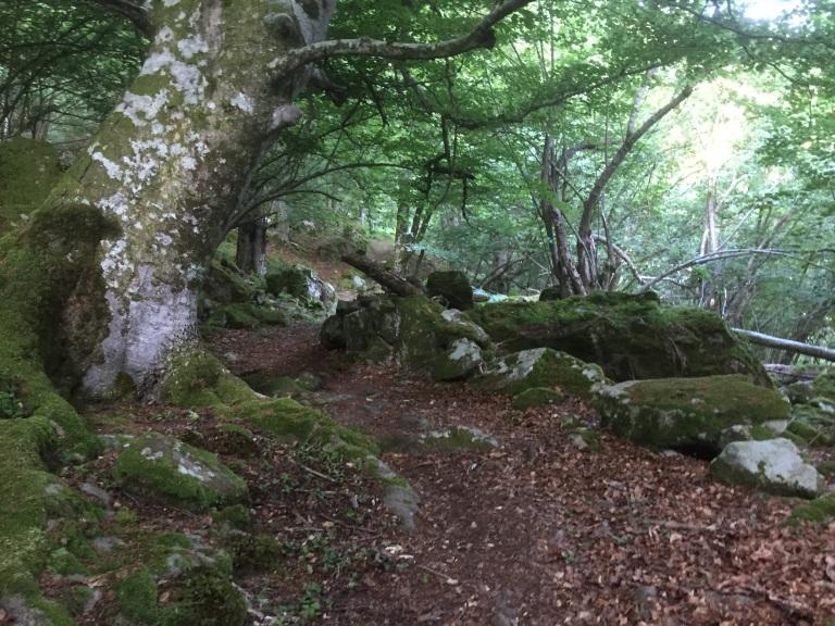 Caminando entre hayas y castaños