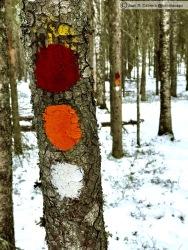 Parque nacional Pyha-Hakkin