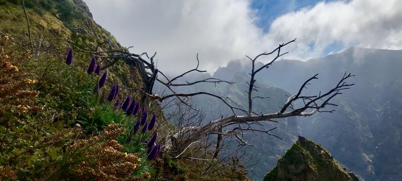 Madeira 2019: PicoGrande
